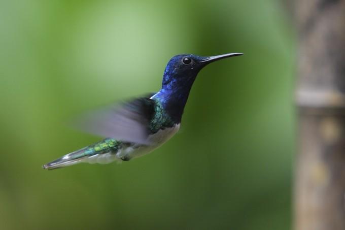 Recruiting Hummingbirds